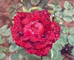 Lyne Gendron. Rosée du matin. Huile sur toile. 30''x30'' - 2020